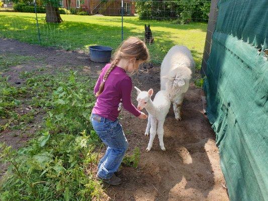 Freizeitangebote mit Alpakas